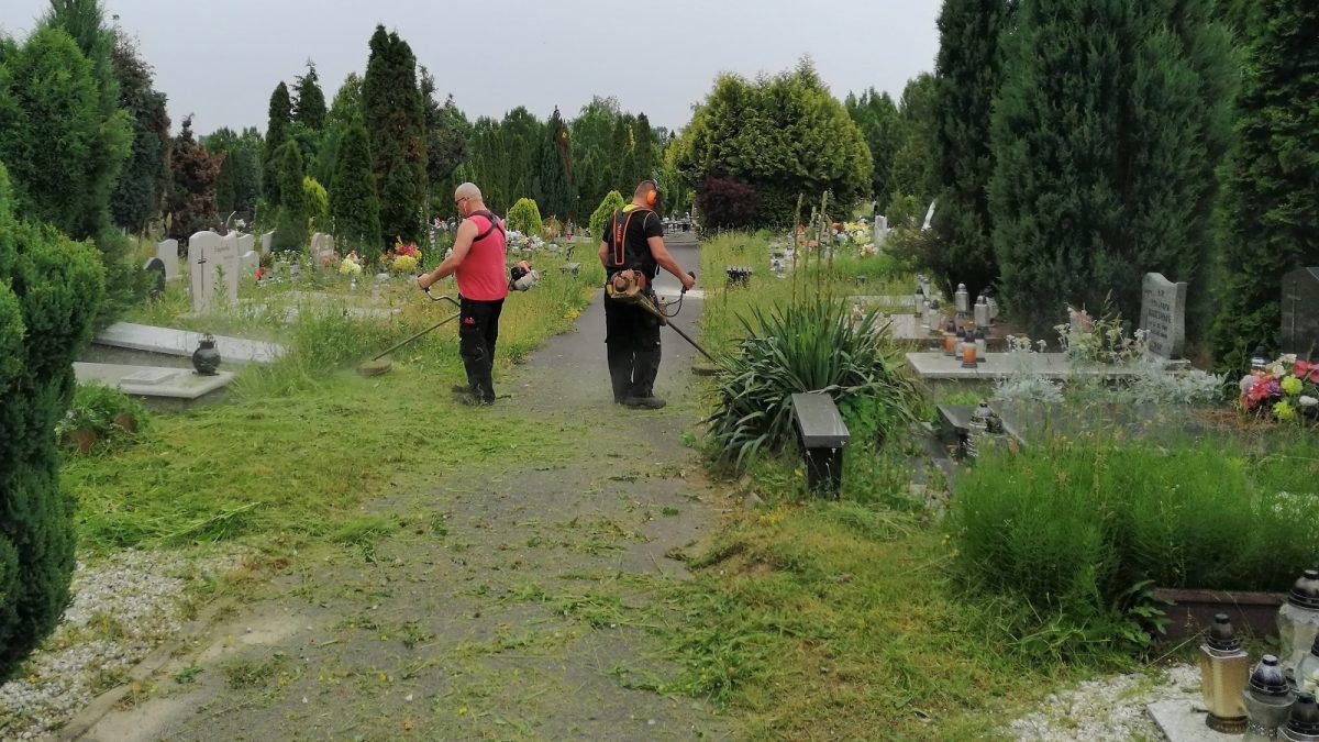 trawa cmentarz